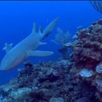Imágenes submarinas de Belize