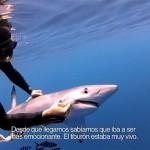 Buceador ayuda a Tiburón azul a quitarse anzuelo