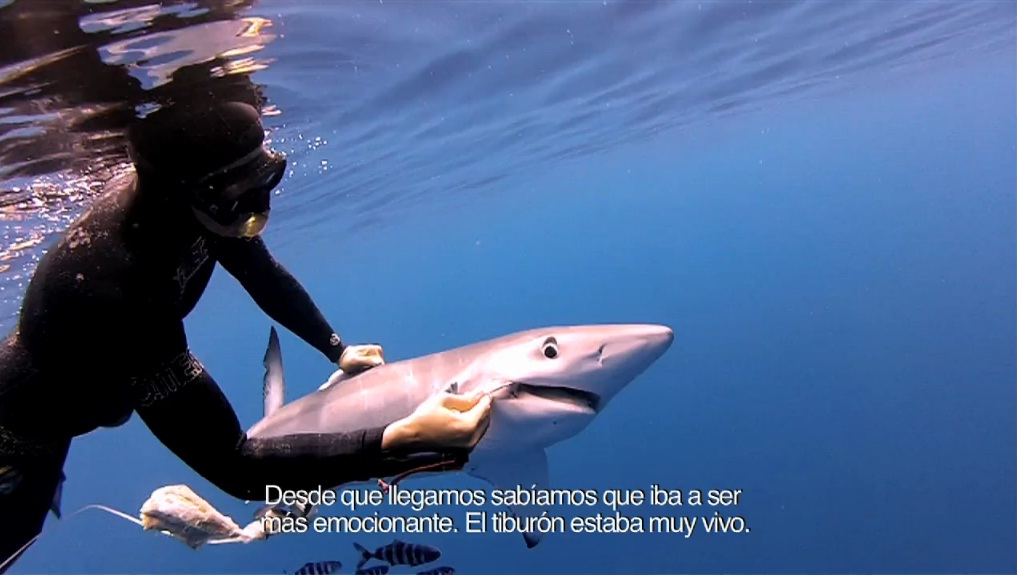 buceo-video-tiburon