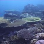 Documental: Maldivas – 'El paraíso del buceo'